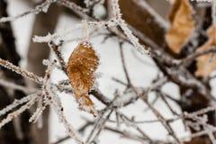 Hojas cubiertas con escarcha y nieve Imagen de archivo libre de regalías