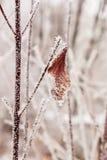 Hojas cubiertas con escarcha y nieve Fotos de archivo libres de regalías