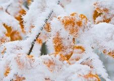 Hojas cubiertas con nieve fotos de archivo