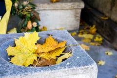 Hojas de arce amarillas caidas del otoño Fotos de archivo