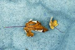Hojas de arce amarillas y marrones del otoño en el pavimento fotos de archivo