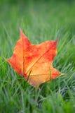 Hojas de arce anaranjadas en hierba verde Imagen de archivo libre de regalías