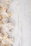 Hojas de arce blancas, fondo de madera Imagenes de archivo