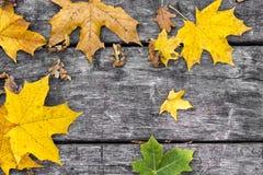 Hojas de arce caidas en la tabla de madera vieja Fondo del otoño Concepto del vintage Foto de archivo libre de regalías