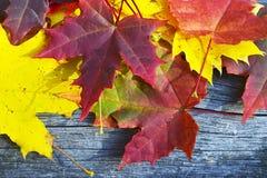 Hojas de arce coloridas del otoño en viejo fondo de madera Fotografía de archivo libre de regalías