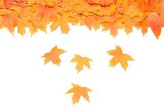 Hojas de arce del otoño Fotografía de archivo