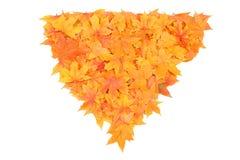 Hojas de arce del otoño Fotografía de archivo libre de regalías