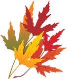 Hojas de arce del otoño ilustración del vector