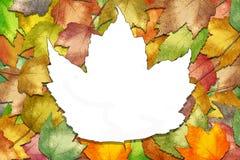 Hojas de arce del otoño con el espacio de la hoja Foto de archivo