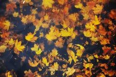 Hojas de arce del otoño en el agua Imagen de archivo libre de regalías