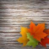 Hojas de arce del otoño en el fondo de madera Fotos de archivo