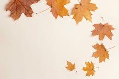 Hojas de arce del otoño en fondo beige Endecha plana, espacio de la copia Imágenes de archivo libres de regalías