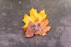 Hojas de arce del otoño en un banco Fotos de archivo