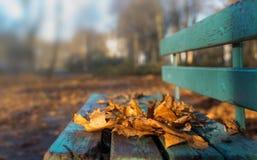 Hojas de arce del otoño en un banco Foco selectivo Espacio para el texto imágenes de archivo libres de regalías