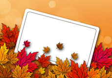 Hojas de arce del otoño en una postal Imagenes de archivo