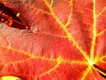 Hojas de arce del otoño del fondo Foto de archivo