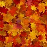 Hojas de arce del otoño, fondo inconsútil. Foto de archivo libre de regalías
