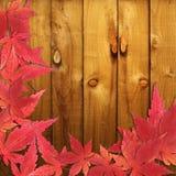Hojas de arce del rojo del otoño Imágenes de archivo libres de regalías