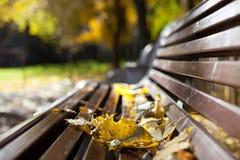 Hojas de arce en un banco en el parque Imagen de archivo libre de regalías