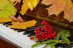 Hojas de arce en un piano Fotografía de archivo libre de regalías