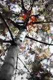 Hojas de arce de la caída en Autumn Season fotos de archivo