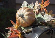 Hojas de arce miniatura de la calabaza y del otoño. Foto de archivo libre de regalías