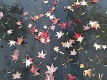 Hojas de arce muertas en la tierra - temporada de otoño Foto de archivo libre de regalías