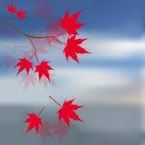 Hojas de arce rojas en las ramas Arce rojo japonés contra el cielo azul y el mar Paisaje Ilustración Fotografía de archivo