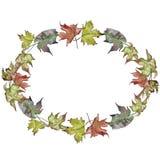 Hojas de arce verdes y rojas de la acuarela Follaje floral del jardín botánico de la planta de la hoja Cuadrado del ornamento de  stock de ilustración
