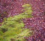 Hojas de arce y musgo verde Imagen de archivo libre de regalías