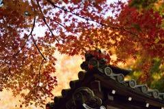 Hojas de Autumn Maple y capilla japonesa Imágenes de archivo libres de regalías