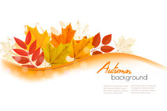 Hojas de Autumn Nature Background With Colorful Imagen de archivo