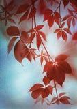 Hojas de Autumn Red en el papel del vintage Fotografía de archivo