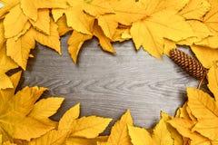 Hojas de Autumn Yellow Maple en el tablero de madera Imágenes de archivo libres de regalías