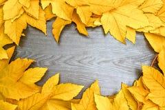 Hojas de Autumn Yellow Maple en el tablero de madera negro Fotografía de archivo libre de regalías