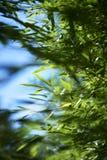 Hojas de bambú imágenes de archivo libres de regalías