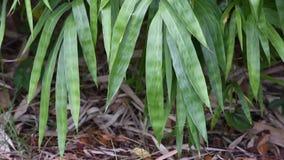 Hojas de bambú verdes en los árboles que se sacuden en el viento almacen de video