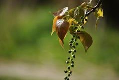 Hojas de Brown con los pequeños compinches verdes Fotografía de archivo libre de regalías