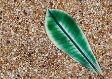 Hojas de cerámica de la flor del Plumeria Foto de archivo libre de regalías