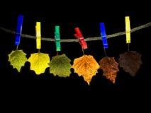 Hojas de Colorfull fotografía de archivo