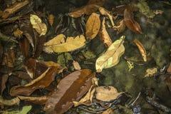 Hojas de decaimiento en agua Imagen de archivo libre de regalías