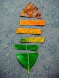 Hojas de diversa edad del árbol frutal del enchufe en backgro de piedra oscuro imagenes de archivo