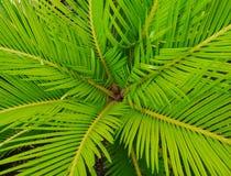 Hojas de hojas de palma Imagen de archivo libre de regalías