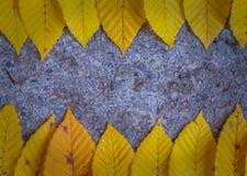 Hojas de la acción de gracias en fondo del asfalto Foto de archivo libre de regalías