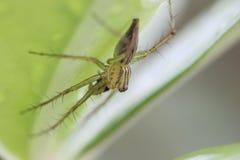 Hojas de la araña Imagen de archivo libre de regalías