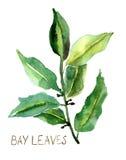 Hojas de la bahía Imagen de archivo libre de regalías