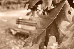 Hojas de la caída Foto de archivo