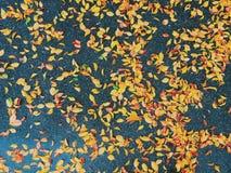 Hojas de la caída Imagen de archivo libre de regalías