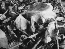 Hojas de la caída Fotografía de archivo