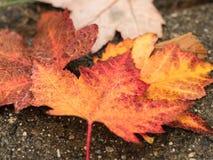 Hojas de la caída Foto de archivo libre de regalías
